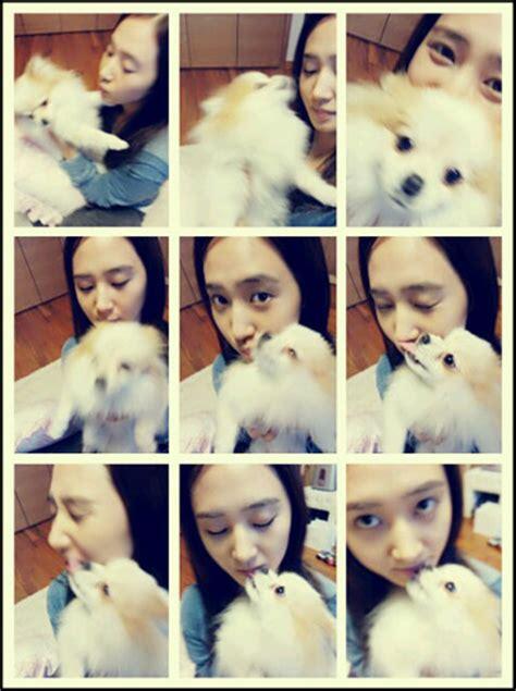 yuri   dog snsd