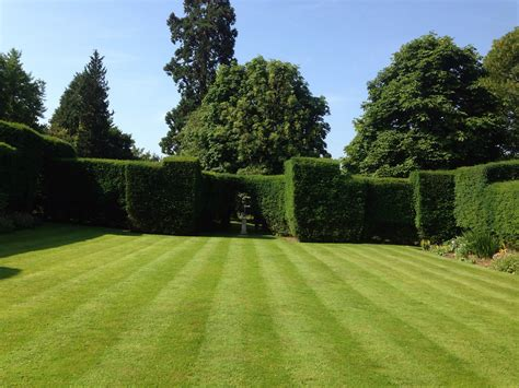 Backyard Grass by Free Images Grass Structure Plant Field Lawn Meadow