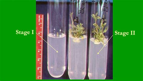 Replace Fluorescent Light by Activity 5 Plant Tissue Culture