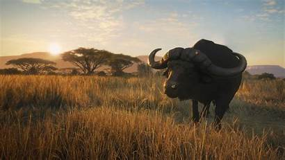 Wild Call Savanna Vurhonga Thehunter Animal Gone