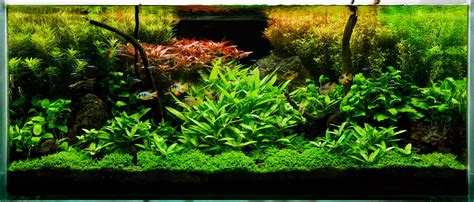 aquascaping on planted aquarium aquarium and aga
