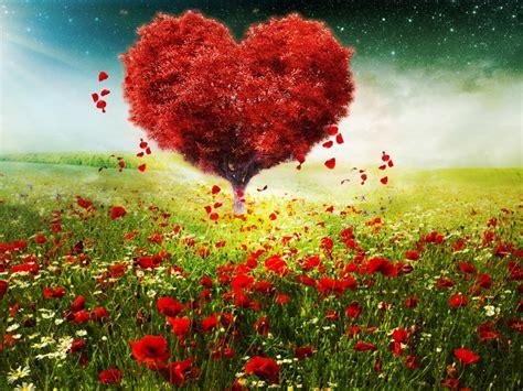 wallpaper love heart tree sunlight poppy flowers