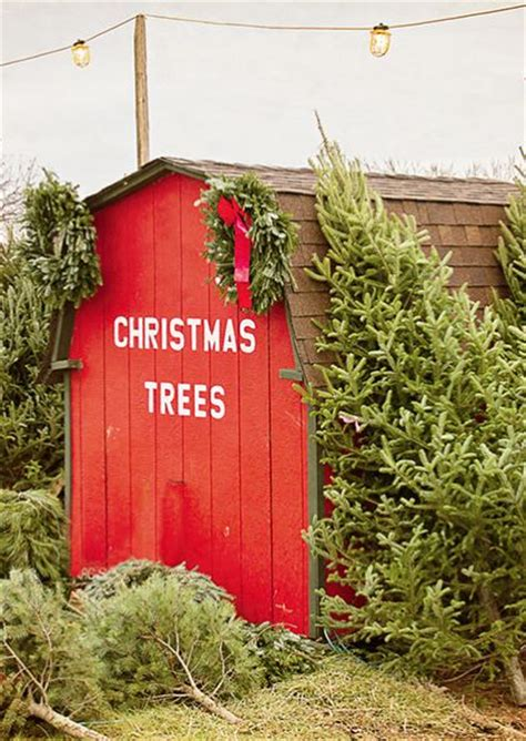 christmas tree farm for sale best 25 tree farms ideas on tree tree farms near me and