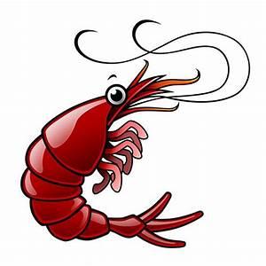 Shrimp clipart shrimp boil - Pencil and in color shrimp ...