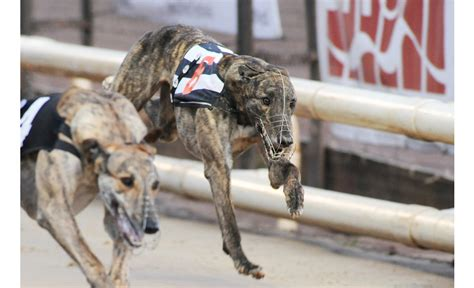 tuesday review greyhound star news from the greyhound