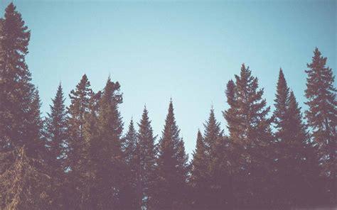 vintage fir trees forest mac wallpaper