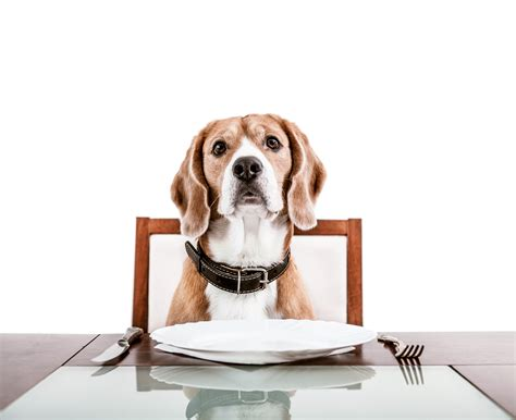 dog eating at table why dogs should be allowed in restaurants national post