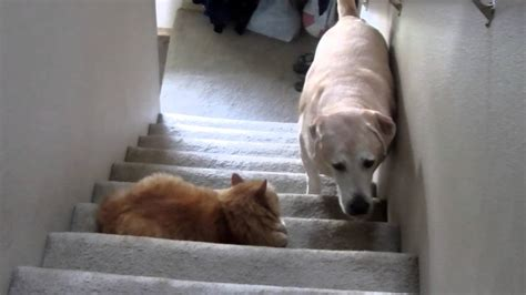 cats dogs scaredy dog afraid walking cat scared funny terrified compilation past stairs pass scary why walk most shall poor