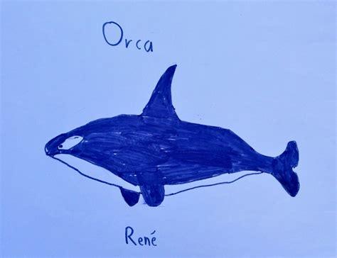 die welt der wale und delfine orcas primolode
