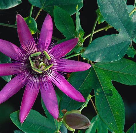 Pflanzen Für Die Küche by Botanik Pflanzen Besitzen Eine Besondere Intelligenz Welt