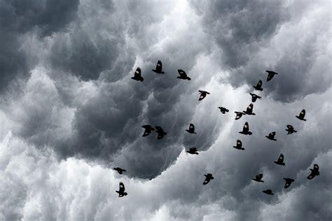 hurricanes affect birds mnn mother nature network
