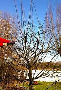 Apfelbaum Wann Schneiden : baumschnitt apfelb ume und pfirsichb ume haushaltstipps und gartentipps ~ Frokenaadalensverden.com Haus und Dekorationen