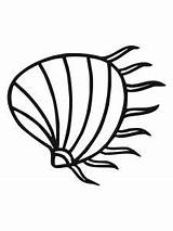 Clam Coloring Shell Oyster Pages Drawing Pearl Printable Underwater Template Getdrawings Razor Sketch Clipartmag Sea sketch template