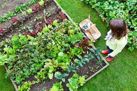 backyard vegetable garden eartheasy guides articles
