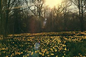 photography beautiful hippie vintage indie flowers field ...