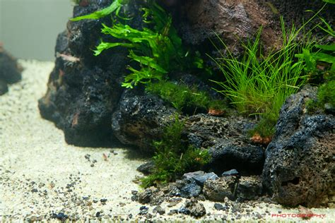 Lava L Fish Tank Diy by 90x45x45cm Unknown Name Aquascaping World Forum