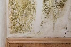 Schimmel An Möbeln : schimmel farbenk nig ~ Markanthonyermac.com Haus und Dekorationen