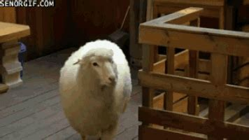 sheeple gifs find share  giphy