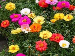 22 Best Flowers For Full Sun