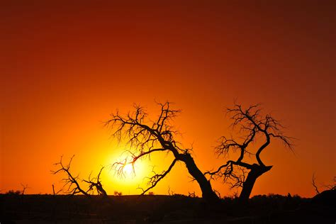 gambar horison cabang bayangan hitam matahari terbit