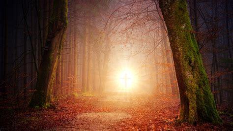background   forest filled   light   cross