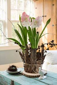 Amaryllis Selber Ziehen : deck the halls with amaryllis stuffs i like ~ Lizthompson.info Haus und Dekorationen