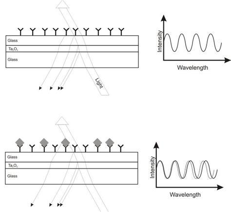 Reflectometric interference spectroscopy - Alchetron, the ...