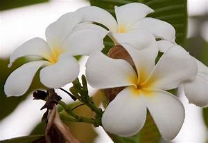 White Flowers Names And Images 8 Hd Wallpaper ...