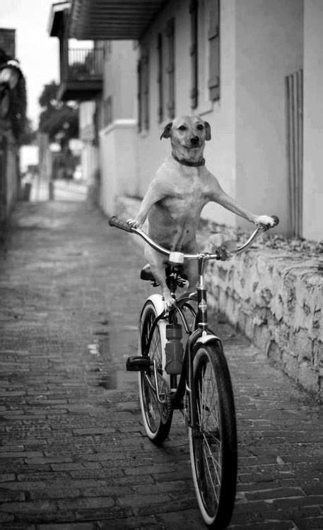 images  bikes  pinterest cate blanchett