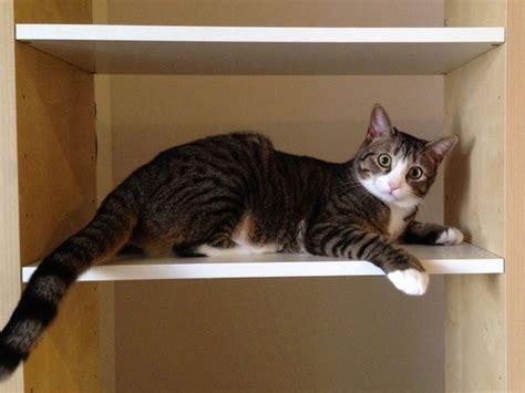 produit répulsif canapé mon secret pour empêcher mon de grimper sur les meubles