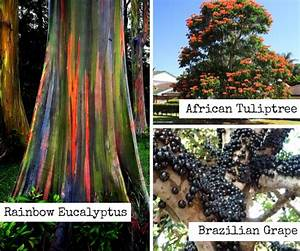 Strange trees form around the world