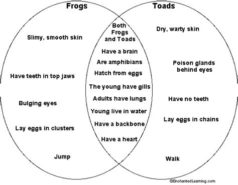 The Similarities And Differences Between Frogs And Toads