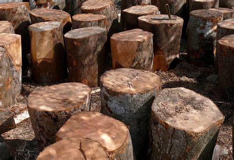 mango wood kedar photography
