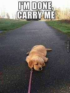 Puppy too tired to walk | Cute Animals | Pinterest