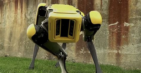 HEADLESS robot dog revealed by Boston Dynamics - and it ...