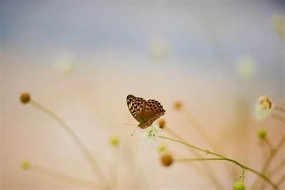 Ubuntu Wallpapers Butterflies Community Desktop Butterfly Wolf