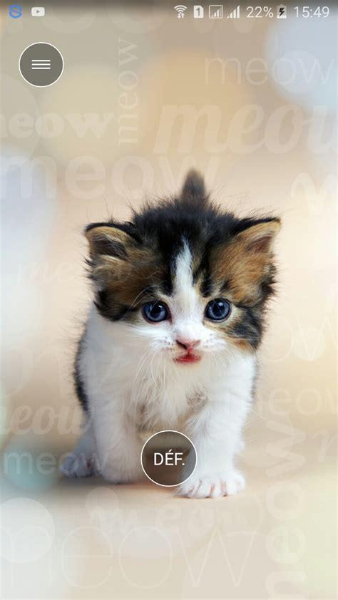 fond d 233 cran chat mignon wallpapers fond d 233 cran chat chat et chaton