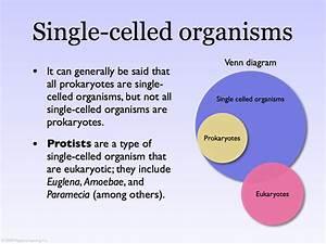 25 Eukaryote And Prokaryote Venn Diagram