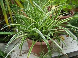 Plantes Grasses Intérieur : entretien plantes grasses d int rieur pivoine etc ~ Melissatoandfro.com Idées de Décoration