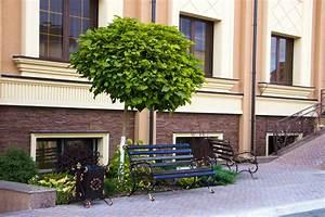 Kugel Trompetenbaum Schneiden : kugel trompetenbaum pflanzen so machen sie alles richtig ~ Lizthompson.info Haus und Dekorationen