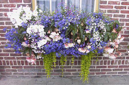 tips bij het planten van kuipplanten terrasplanten