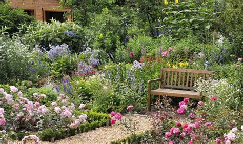 bushes for gardens alan titchmarsh on growing rose shrubs in your garden garden life style express co uk