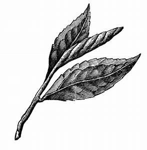 Tea Leaf.gif - ClipArt Best