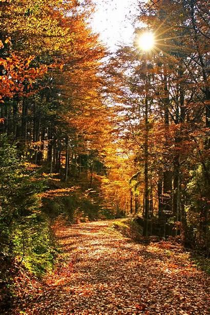Fall Autumn Desktop Mountain Code 20trail Mountains