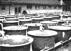 freshwater fish farming  virginia selecting