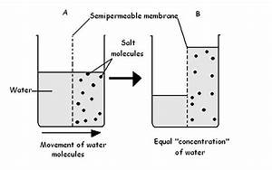 Sample-cells  The Plasma Membrane