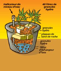 culture hydroponique de la graine de cannabis int 233 rieur graines cannabis