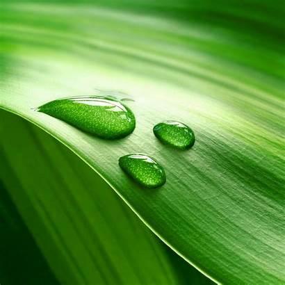 Ipad Retina Dew Leaves Wallpapers Pro Cool