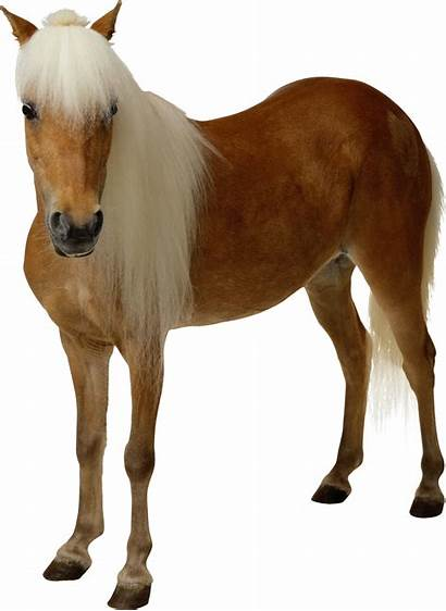 Horse Transparent Background Clipart Brown