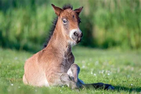 horses glue killed horse predator attacked being morten storgaard april